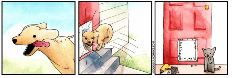 2Cat&Dog